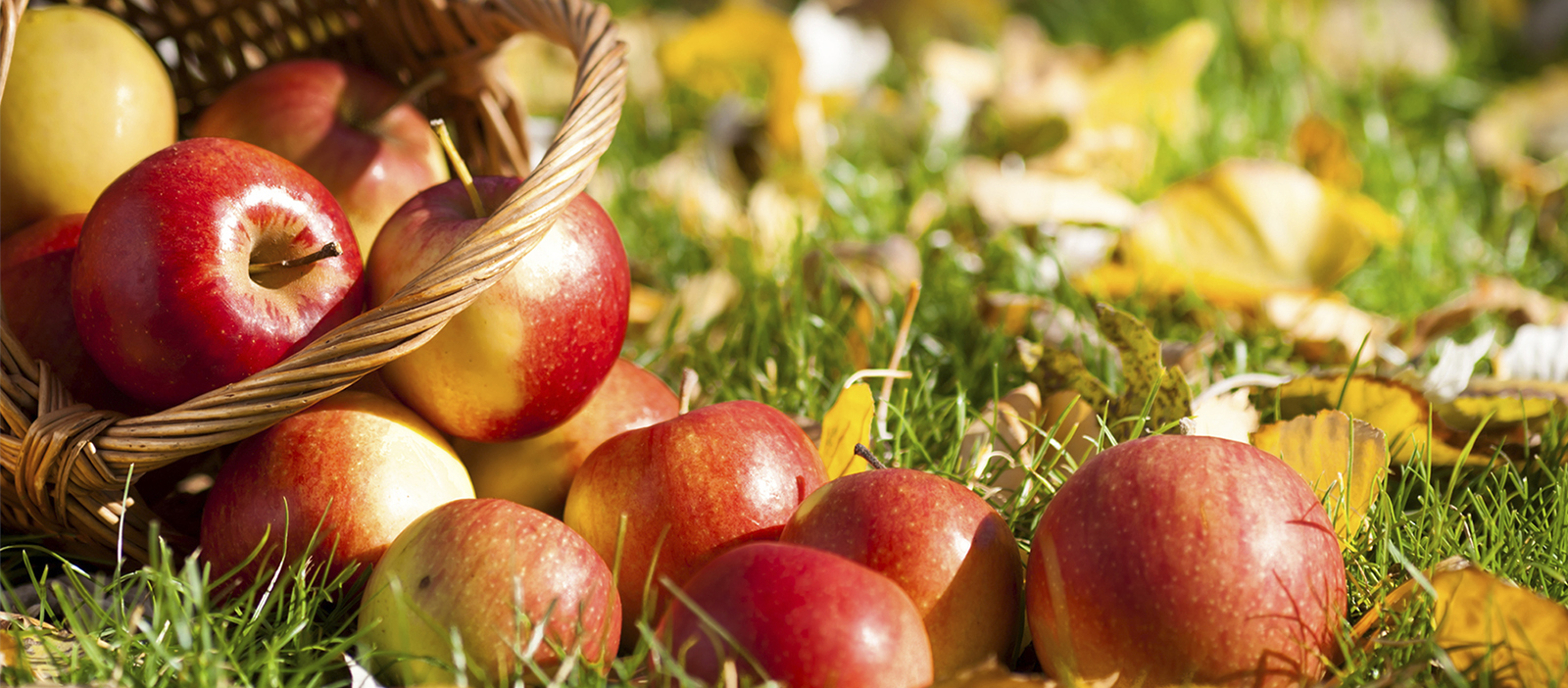 CCE Fall Schedule - Red Apples on Leaves